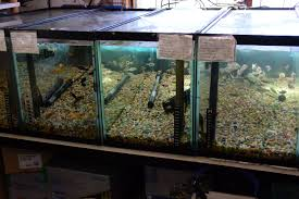 Tropical Fish Home Decor Home