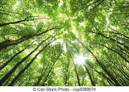 2 804 936 trees stock photos illustrations and royalty free trees