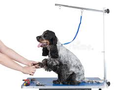 dog hair cutting table dog grooming table stock photo image of animal grooming 33208052