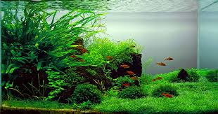 Most Beautiful Aquascapes Aquascape Aquarium Designs Pictures Aquascape Aquarium Designs