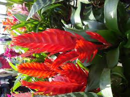 Tropical Plants Images - design ideas interior decorating and home design ideas loggr me