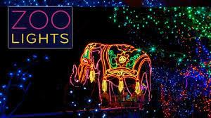denver zoo lights hours zoo lights denver zoo