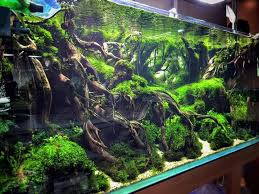aquascaping layouts with stone and driftwood 191 best aquascaping images on pinterest aquascaping fish