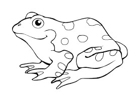 tadpole coloring page tadpole and froglet coloring page free