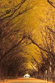 19 magical tree tunnels you should definitely take a walk through