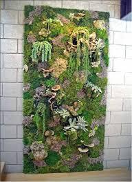 vertical garden with moss plants outdoor pinterest