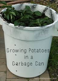 Backyard Garbage Cans by Update On Growing Potatoes In A Garbage Can Week 4 Happy Money