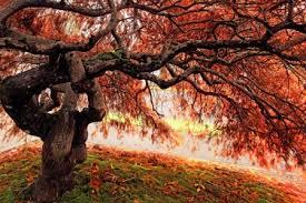maple tree jigsaw puzzle