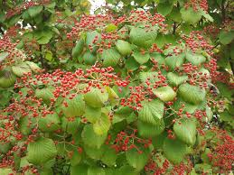 kansas native plants powell gardens u0027 blog fall fruit and the