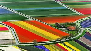 Netherlands Tulip Fields Helen Shaddock Tulip Fields