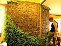 diy how to making of patrick blanc style green wall vertical