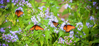 Atlanta Botanical Gardens Groupon Membership Tucson Botanical Garden