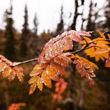 pin by melike erkan on fall pinterest autumnal equinox