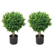 romano 2 foot indoor outdoor hedyotis topiary trees set of 2