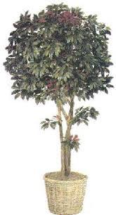 artificial capensia trees