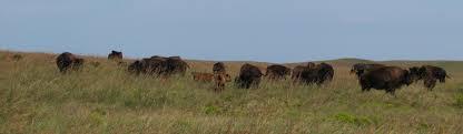 Breakfast Pics Tallgrass Prairie National Preserve U S National Park Service