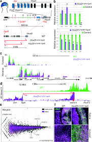 large scale genomic reorganization of topological domains at the