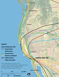 it u0027s hard to overestimate the importance of the salton sea to