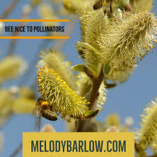 meet the lesser known pollinators