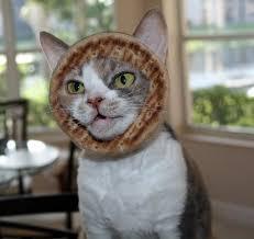 Cat Breading Meme - image 243417 cat breading know your meme