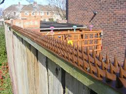How To Get Rid Of Pigeons On My Roof by Fence Wall Spikes Pack Of 30 13 5m To 40 5m Brown Amazon Co