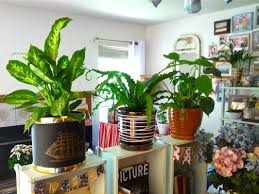 fabulous plants for the living room decorate living room with