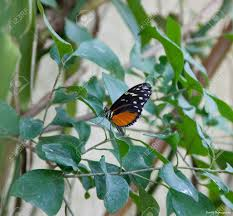 colourful butterfly stock photo picture and royalty free image