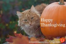 companion animal psychology happy thanksgiving