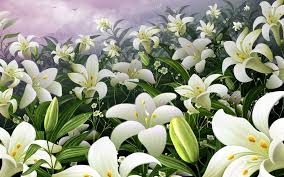 white lillies garden of white lilies walldevil