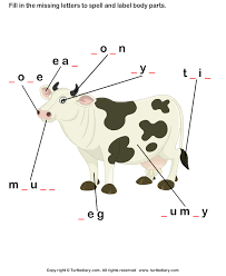 body parts of cow worksheet turtle diary
