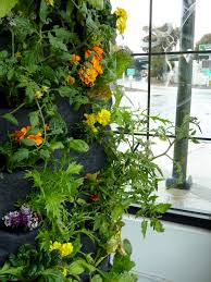 Types Of Vegetable Gardening by Aquaponic Vertical Vegetable Garden U2014 Florafelt Vertical Garden