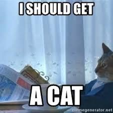 I Should Buy A Boat Meme Generator - newspaper cat meme 28 images newspaper cat realization meme
