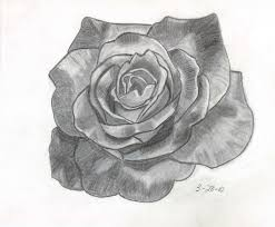 pencils ketch of a rose pencil sketch of rose drawing pencil