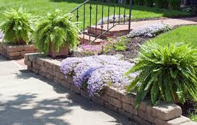 Patio Plants For Sun Everything You Need To Know About Container Gardening Rodale U0027s