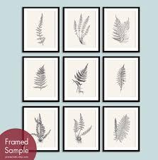 Garden Botanicals Ferns Garden Botanical Prints Series E Set Of 9 Prints