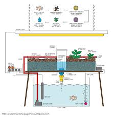 how to build a simple aquaponics system alice woods