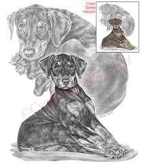 dog drawings and breed art prints canine artwork and pencil