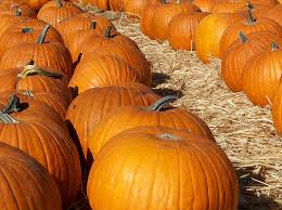 Local Pumpkin Patches Luxury Living In Northridge Ca Blog
