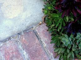 Patio Edging Options by Landscape Edging Materials And Ideas Patios And Paths