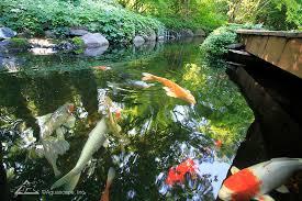 Aquascape Inc Koi Ponds Ecosystem Ponds Backyard Pond Designs Aquascape