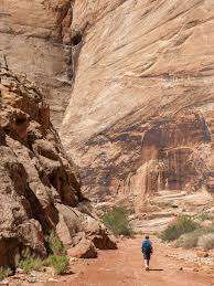 Capitol Reef National Park Map Day Hikes In Capitol Reef National Park