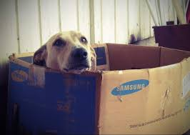 Indigo Dog House 5 Dog House Plans For 2 Large Dogs Building A Huge Dog House