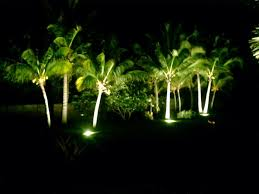 lighting palms at night discussing palm trees worldwide palmtalk