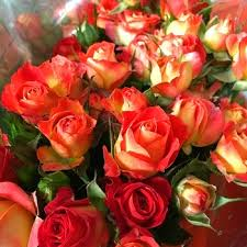 Wholesale Roses Flower Decoration Spray Champagne Rose Wholesale From Kunming