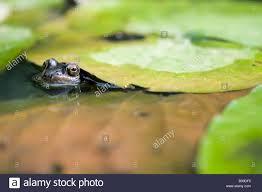 garden frog uk home outdoor decoration