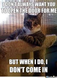 Stupid Cat Meme - stupid cat by bacon pancakes meme center
