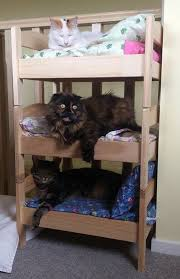 Dolls Bunk Beds Uk Bunk Beds For Cats Ikea Cat Stuff Pinterest