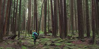 forest images Forest movie jpg