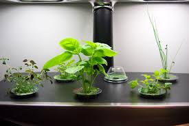 growing herbs indoors colorado front range gardening