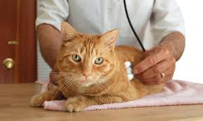 Creature Comforts Mobile Vet Pet Care All God U0027s Creatures Mobile Veterinary Practice Groupon
